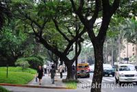 Ayala Triangle Attractions